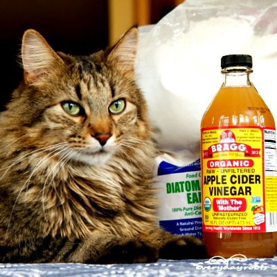 5 natural ways to prevent get rid of fleas on cats herbs and oils hub - Home remedies to keep fleas away ...