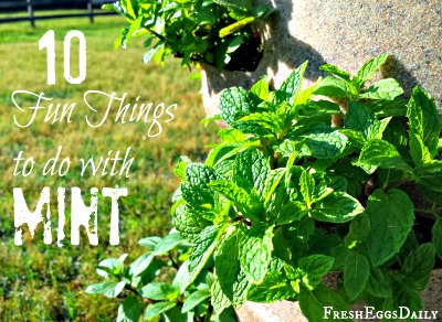 10 Fun Things to Do with Mint This Summer