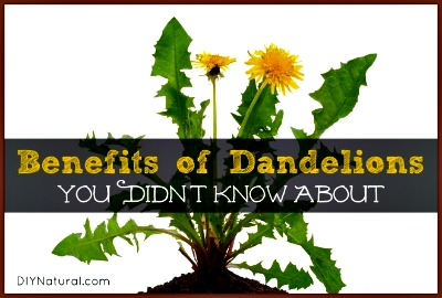 16 Amazing Benefits You Didn't Know About Using Dandelions
