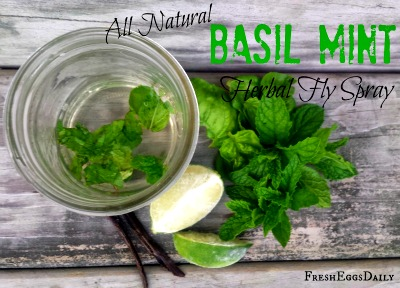Homemade Basil Mosquito Spray Recipe