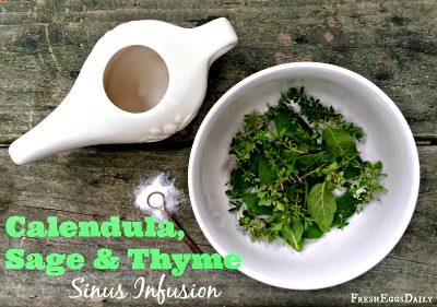 How to Make an Herbal Sinus Infusion using Calendula, Sage, and Thyme