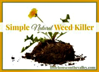 Homemade Natural Weed Killer Recipe