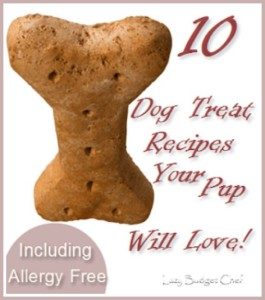 10 Homemade Dog Treat Recipes – Including 6 Allergy Free Recipes
