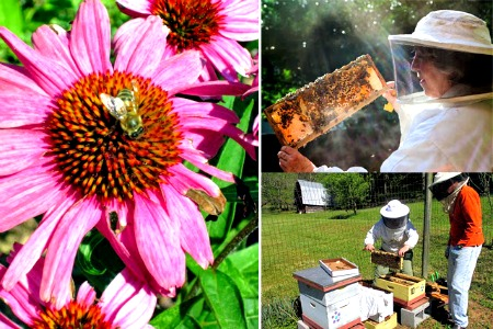 How to Get Started Keeping Honey Bees