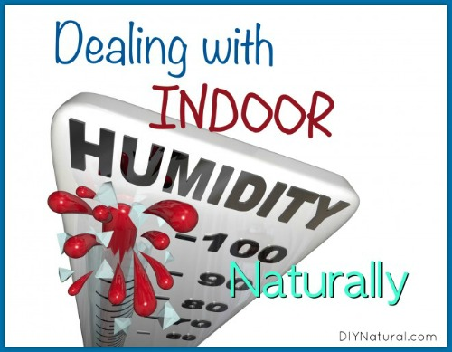 How to Deal With Indoor Humidity Naturally