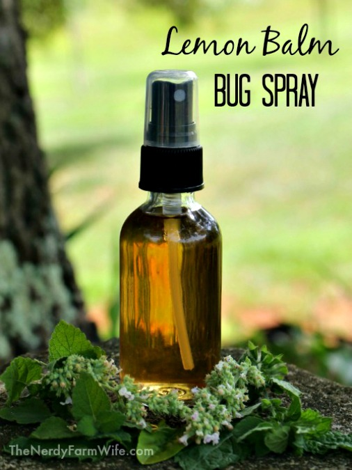 How to Make Lemon Balm Bug Spray