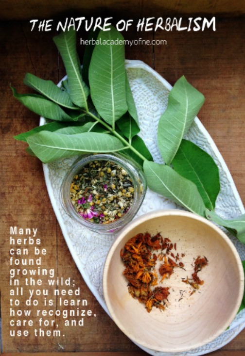 The Nature of Herbalism