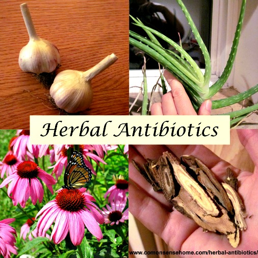 All About Herbal Antibiotics