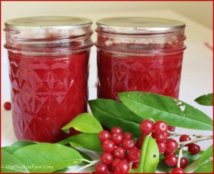 AutumnBerry Jam Recipe and Why You Should Make It