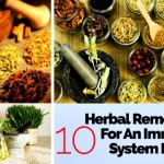 10 Herbal Remedies for an Immune System Boost