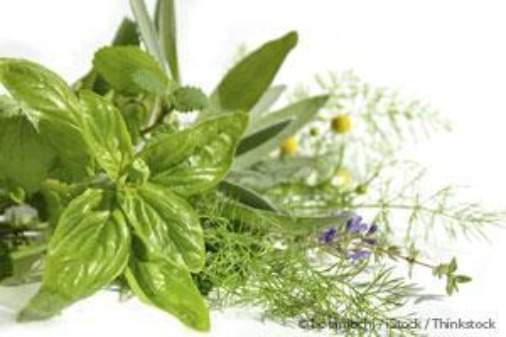 7 Underrated Medicinal Plants