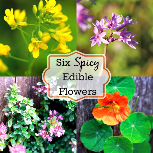 Decorate Your Food with Six Spicy Edible Flowers