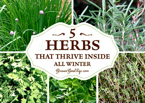 Grow Herbs Indoors – 5 Herbs That Thrive Insi