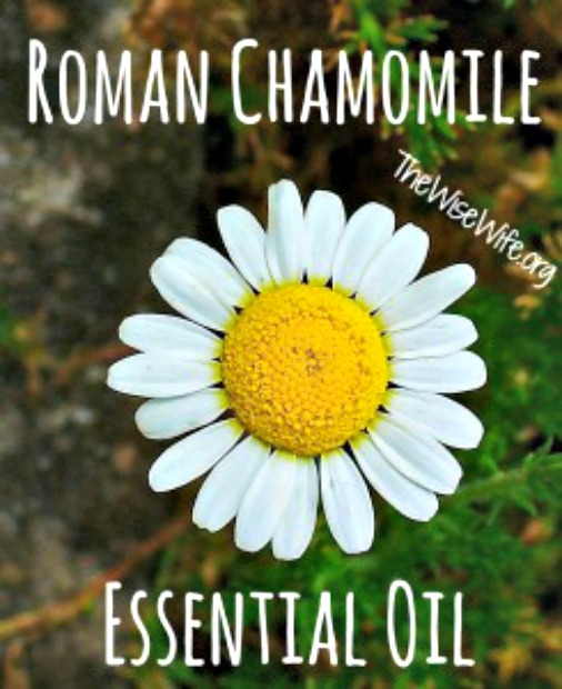 Essential Oil Spotlight - Roman Chamomile Essential Oil