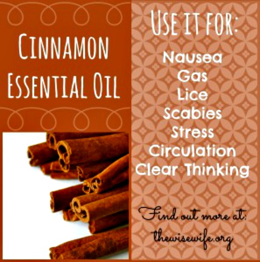Essential Oil Spotlight - Cinnamon Essential Oil