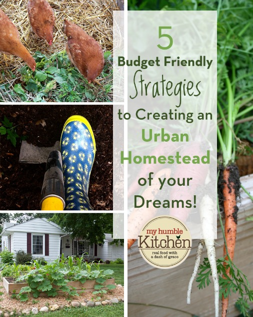 5 Budget Friendly Strategies to Creating an Urban Homestead