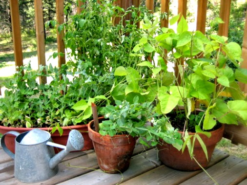 The 15 Best Vegetables that Grow Well in a Container or Pot