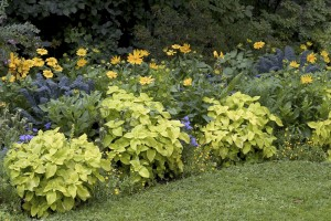 Low Maintenance Garden Tips – Ideas And Plants For Easy Gardening