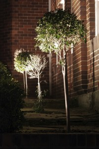 DIY Uplighting – Garden Lighting Solutions For Landscapes