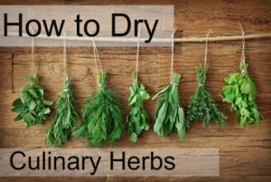 3 Things to Consider When Drying Culinary Herbs