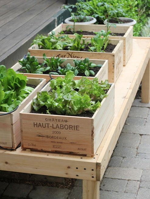 10 Gardening Ideas for Your Patio or Garden