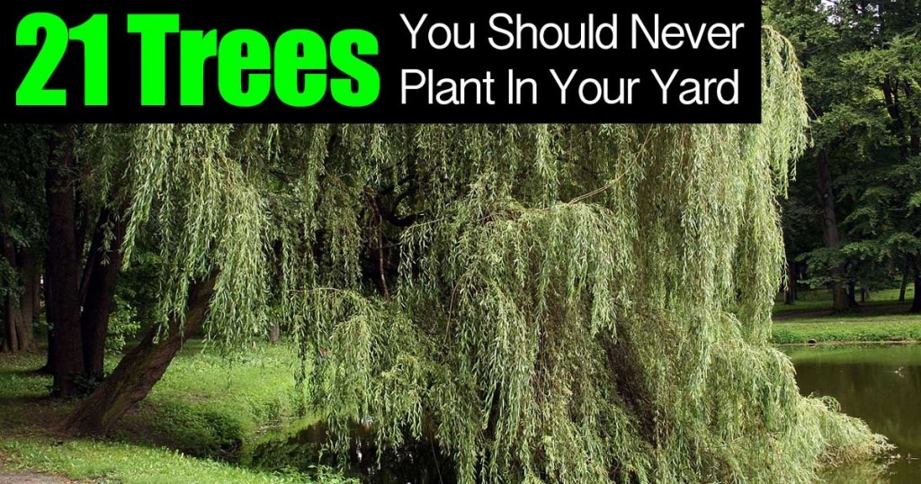21 trees to never plant in your yard