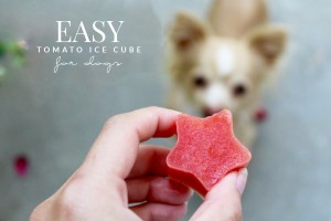 Easy Tomato Ice Cube Treat for Dogs