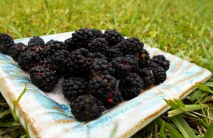 How to Make a Delicious Dewberry Syrup