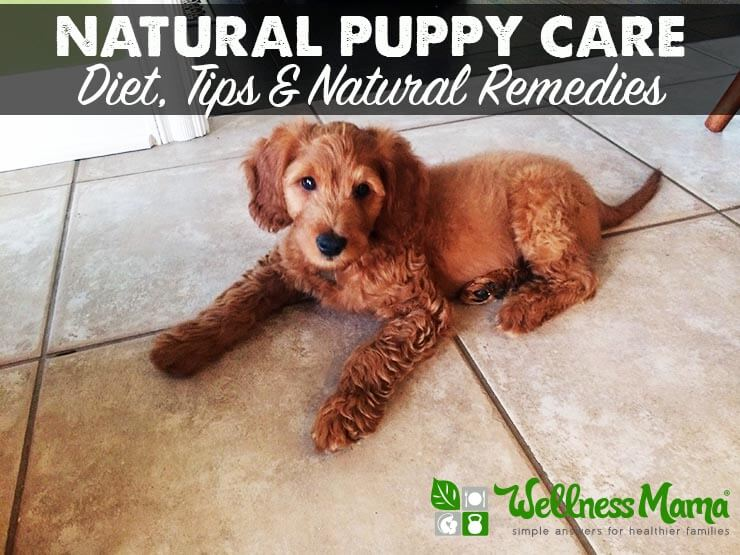 Natural Puppy Care