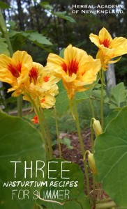 Three Nasturtium Recipes