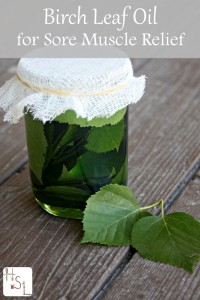 How to Make Birch Leaf Oil for Sore Muscles