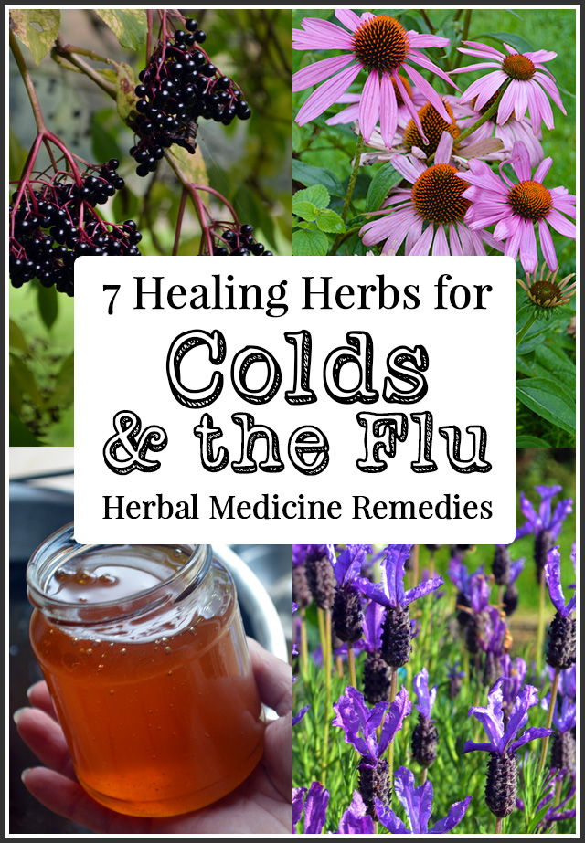 7 Herbs to Fight Colds and the Flu