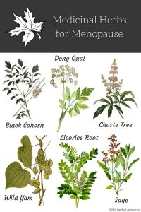 Medicinal Herbs for Menopause Relief and Treatment