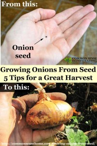 5 Tips for Growing Onions From Seed