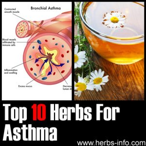Best 10 Herbs to Treat Asthma