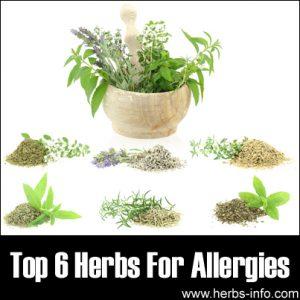 10 Best Herbal Remedies for Allergies